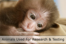 Animals used for research and testing