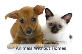 Animals without homes
